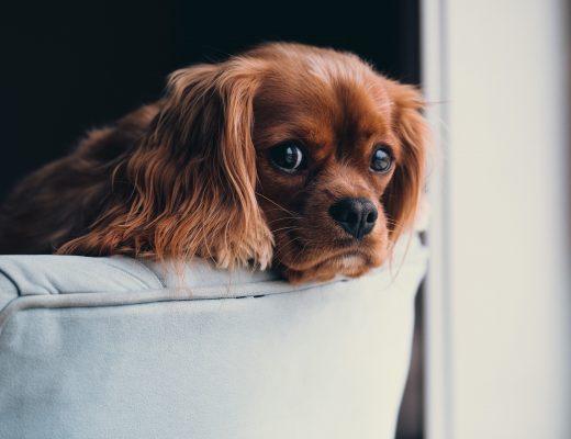 semester med hund i sverige